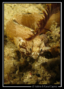 If anybody knows the scientific name of this fish, please... by Raoul Caprez