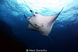 manta alley, komodo islands by Heru Suryoko