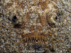 An evil grin, two eyes, and sand: stargazer in Dauin, Neg... by Daniel Wernli