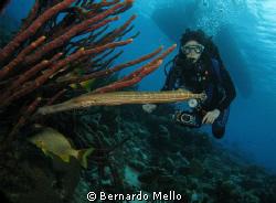 An special moment in Boinaire by Bernardo Mello