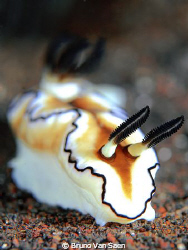 One of my first tests shooting a nudibranch with focus on... by Bruno Van Saen