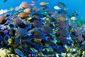 Huge school in a feeding frenzy. Bonaire, D70 Subal Inon ... by Rick Cavanaugh