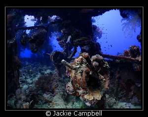 Bridge of the Shinkoku Maru in Truk Lagoon:)
