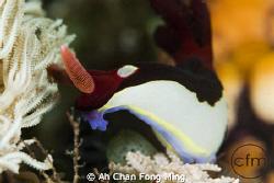 Taken By Nikon D200, 105mm Sea&Sea Strobe by Ah Chan Fong Ming