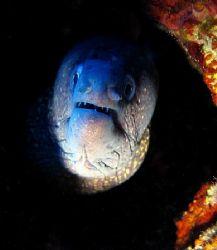 A Fisch You Say ?! (Mediterrian morray eel, taken at Elba... by Alena Vorackova