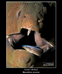 Moray & Cleaner Wrasse, taken with a G10 and an Epoque ES... by Sean Cooper