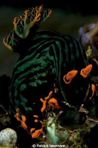 Nudi taken with Canon 400D/Hugyfot by Patrick Neumann
