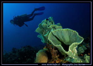 My wife Caroline diving in the clear waters on le East si... by Michel Lonfat