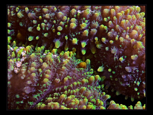 """""""Coral Surface""""  by Henry Jager"""