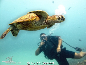 My friend phot-bombs a shot of a nice honu.  ;-) by Rylan Stewart