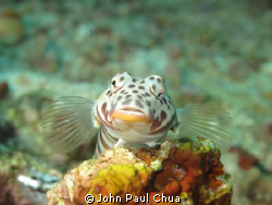i don't know the name of the fish.Fish looks like posing ... by John Paul Chua
