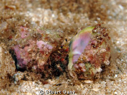Hermit crab looking to up-grade. by Stuart Ganz