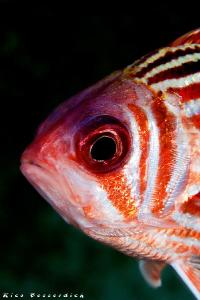 Soldier-Fish by Rico Besserdich