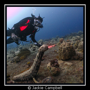Newly discovered species !! The fire breathing sea cucum... by Jackie Campbell