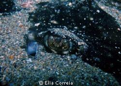 Eye! by Elia Correia