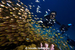 a photographer came across lots of coral fishes by Kandis Semidang
