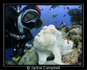 14 years diving.....and this was my first frog fish !! I... by Jackie Campbell