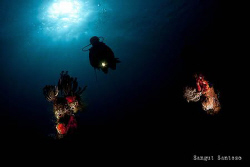 Corals from the darkness by Sangut Santoso