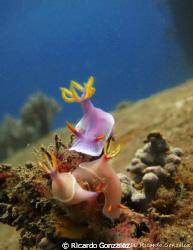 Dive site is Bai Su at Whale Island, Vietnam.  Taken 201... by Ricardo Gonzalez