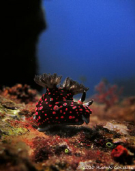 "Dive site ""3 Kings"", Whale Island, Vietnam. Photo taken ... by Ricardo Gonzalez"