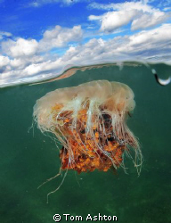 Lions mane jelly. Shot using a port extension I construct... by Tom Ashton
