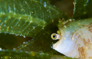 A small mussle is looking suspicious to me ;-) CANON 40D,... by Rico Besserdich