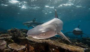 Daybreak on Shark Reef. by Sam Cahir