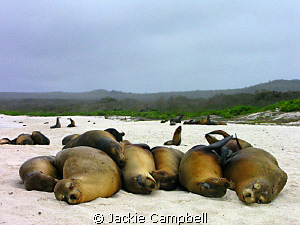 There were 7 in the bed...and the little one said....roll... by Jackie Campbell