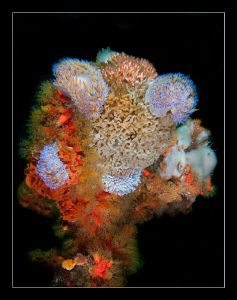 5 Gas flame nudi's sitting in a tree...... All 5 have a ... by Charles Wright