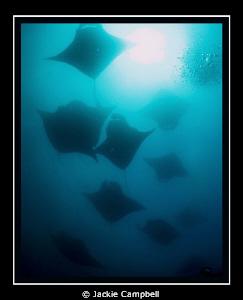Manta wallpaper..... Canon s90, inon fisheye lens . Shot... by Jackie Campbell