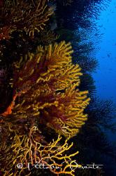 Mediterranean seabed by Vittorio Durante