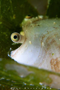 A close view to a shell :-) by Rico Besserdich