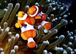 It looks like a mating Mandarin Fish......... by Bernard Maglana