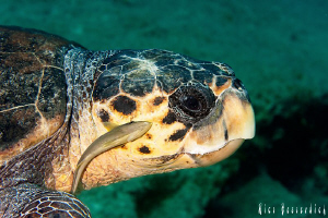 "Sea turtle with an ""unwanted"" guest. shot with 60mm makro... by Rico Besserdich"