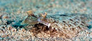 flounder in widescreen :-) by Rico Besserdich
