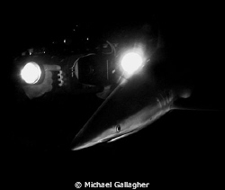 Photographing silky sharks at night in the Red Sea, Sudan... by Michael Gallagher