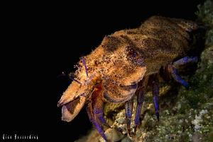 Spanish Lobster ( night-dive ) by Rico Besserdich