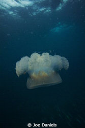 Some nice jellies around at the moment by Joe Daniels