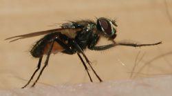 Ich habe mich hingesetzt im Jura und wollte eine Fliege f... by Steven Christen