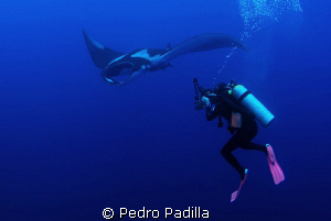 Diving with Big Mantas by Pedro Padilla