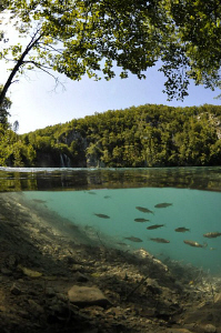 A school of Roach in an inland lake, North Croatia. by Paul Colley