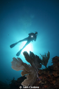 sea fan & diver by Juan Cardona
