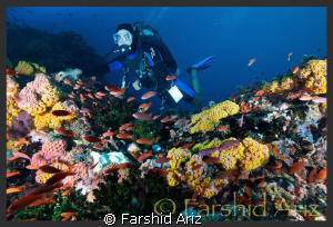 It was near the end of our dive when we got to this point... by Farshid Ariz
