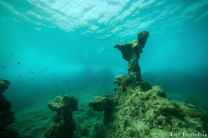 Mediterenean reef on a wavy afternoon. CANON 40d with Sig... by Rico Besserdich