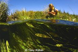 Mountain stream by Tony Makin