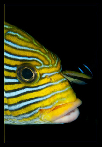 Sweetlips getting a facial by Charles Wright