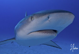 Close up and personal with Reef Sharks at El Dorado Reef ... by Steven Anderson