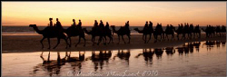 Camels at sunset on an incoming tide. Broome Australia by Andrew Macleod