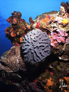 The reefs of Cozumel always show their color! by Steven Anderson