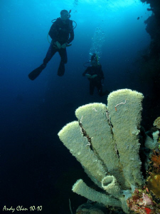 Tube Sponge and Divers - West Bali by Andy Chan